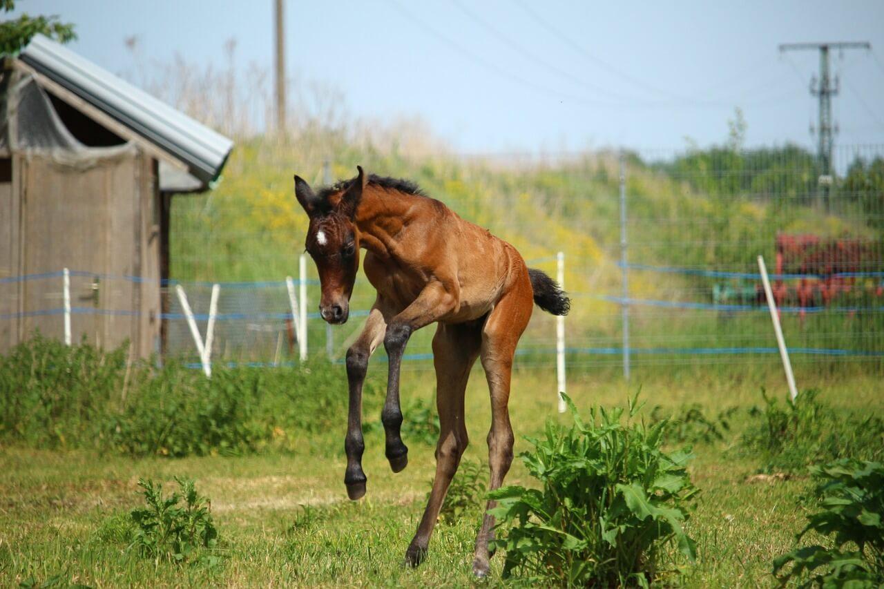 一口馬主における種牡馬の選び方【種牡馬別の勝ち数を公開】