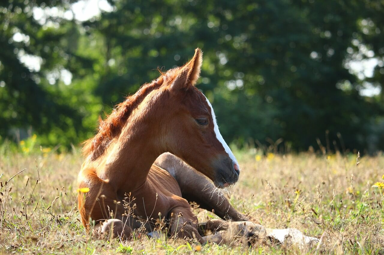 一口馬主で出資する馬はどっち?【高額で強そうな馬、安くてそこそこ走りそうな馬】