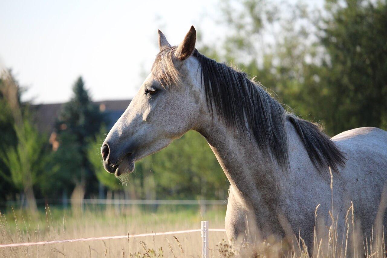 一口馬主の愛馬たち【シルクホースクラブ馬の近況状況】