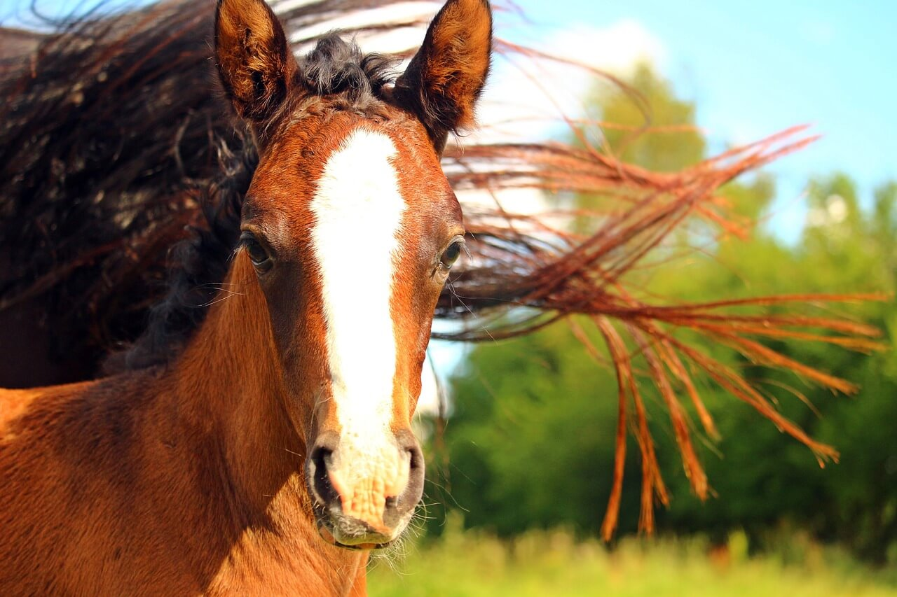 一口馬主出資の抽選に関する注意点【馬の検討は慎重にすべし!】