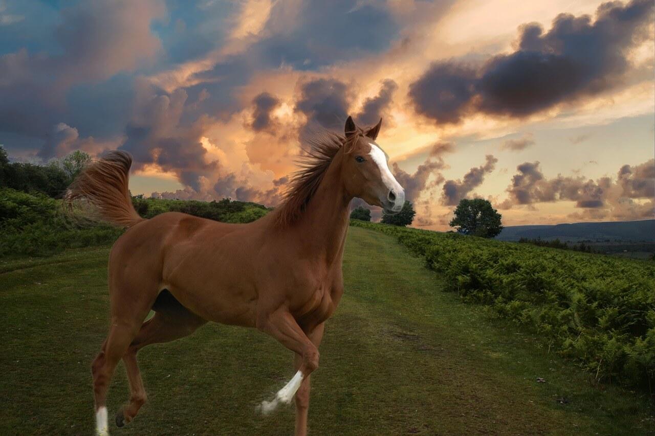一口馬主を始めるのに出資馬の厩舎は重要?【厩舎選びは重要なファクター】