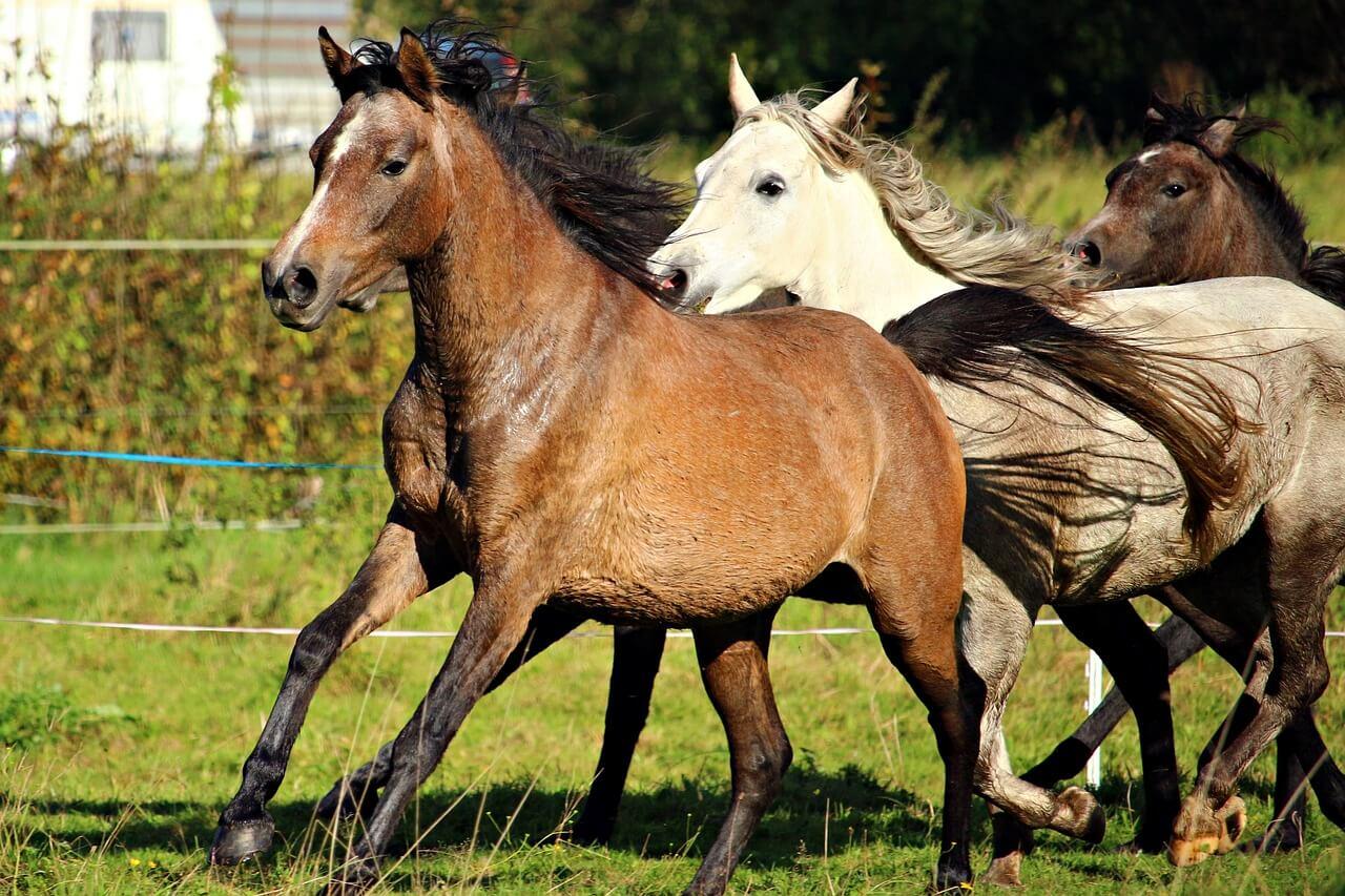 馬主資格を法人で取得する方法【一口馬主ではなく馬主資格の取得】