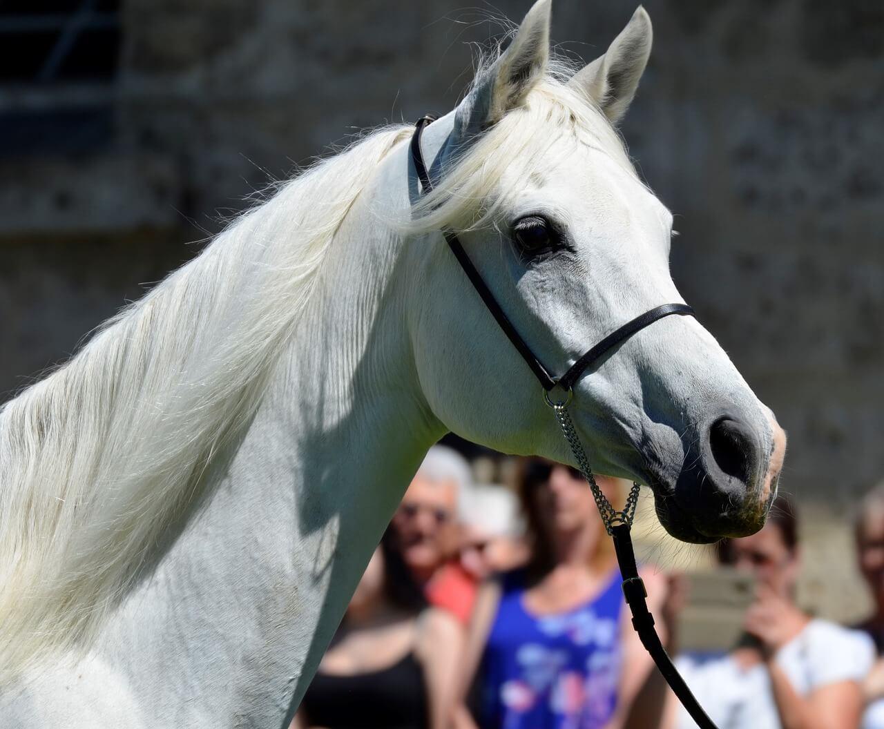 2020年度一口馬主回収率ランキング!【最も回収率が高い馬は?】