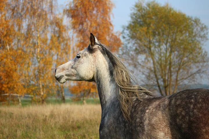 一口馬主によるダート馬のおすすめ【ダート馬の活躍に関して】