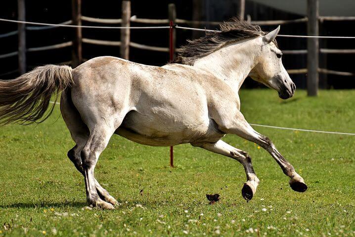 一口馬主の競走馬は何歳まで走れるのか?【馬主と一口馬主の違いを解説】