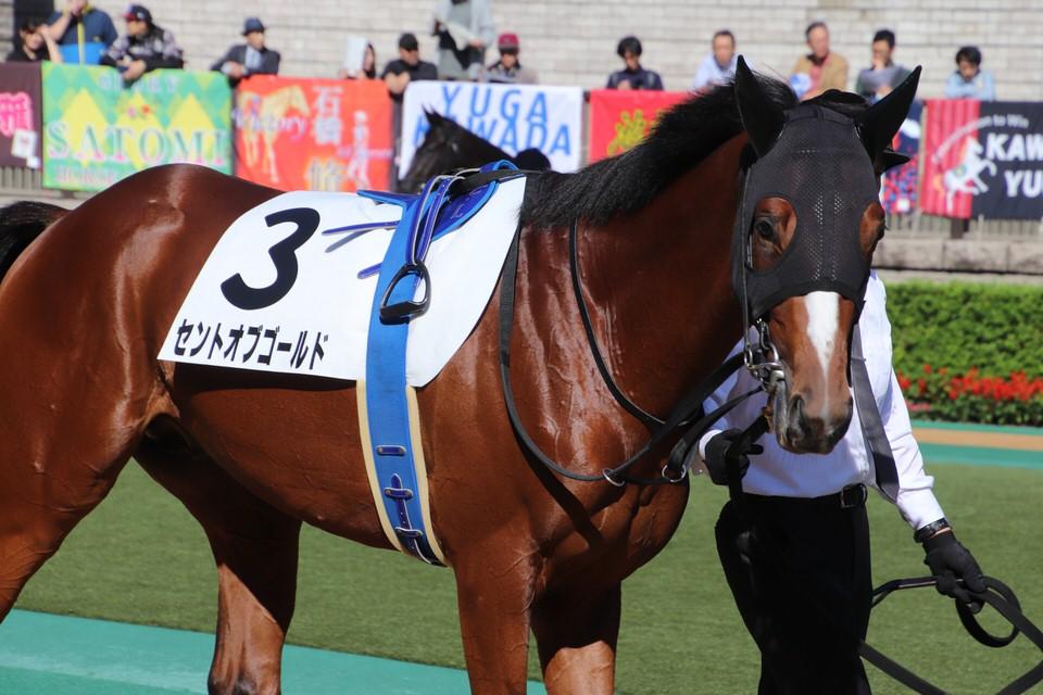 2020/07/04 愛馬の近況【一口馬主 セントオブゴールド】
