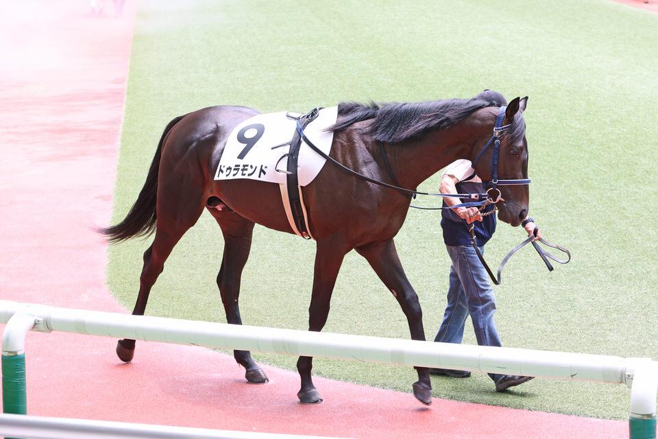 2020/08/22 愛馬の近況【一口馬主 ドゥラモンド】