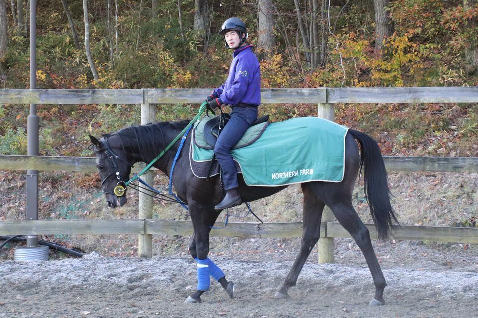 【ドゥラモンド】2020/11/20 トレセンに帰厩、鞍上も依頼中!【愛馬の近況】
