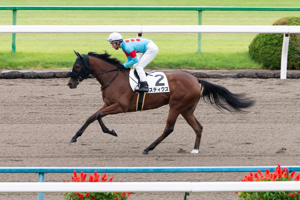 【スティクス】2020/11/17 厩舎・騎手からのコメント【愛馬の近況】