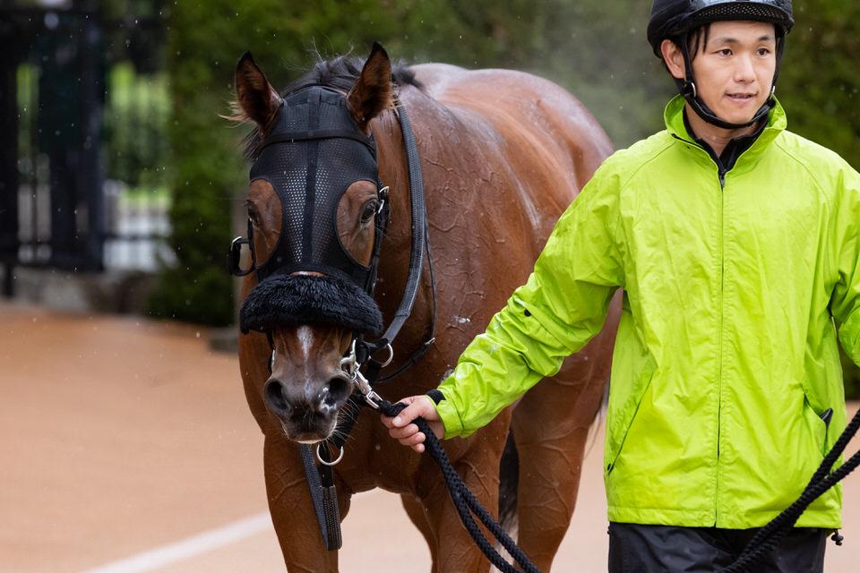 【スティクス】2020/11/06 動きも素軽くなり好調維持【愛馬の近況】