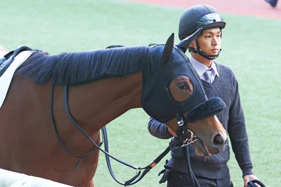 【スティクス】2020/11/28 体長変わりなし、近々トレッドミル運動へ【愛馬の近況】