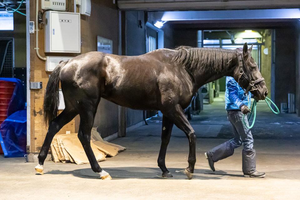 【リズムオブラヴ】2020/12/26 来年より乗り運動開始【愛馬の近況】