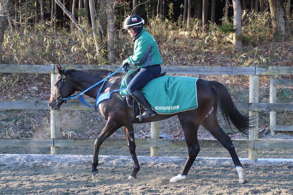 【アンダープロット】2021/01/09 10日の検疫で帰厩予定【愛馬の近況】
