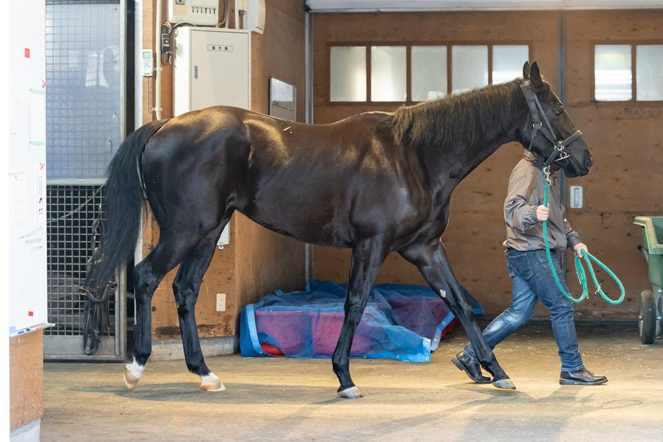 【リズムオブラヴ】2021/01/30 来月から乗り運動を開始【愛馬の近況】
