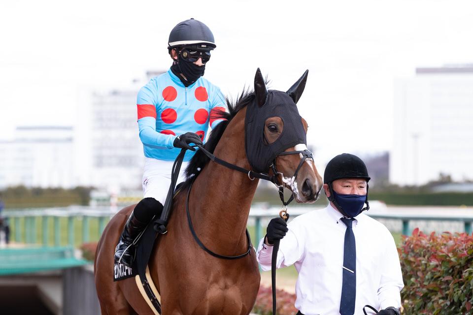 【セントオブゴールド】2021/02/06 次走予定確定、鞍上は未定【愛馬の近況】