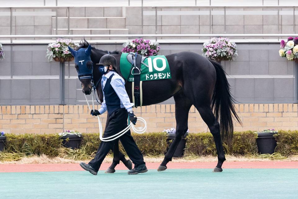 【ドゥラモンド】2021/02/20 脚元含め問題なし、しっかりとした脚取り【愛馬の近況】