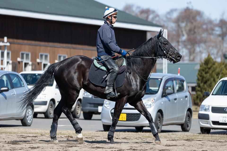 【リズムオブラヴ】2021/04/10 左前膝に疲れがたまりやすい【愛馬の近況】