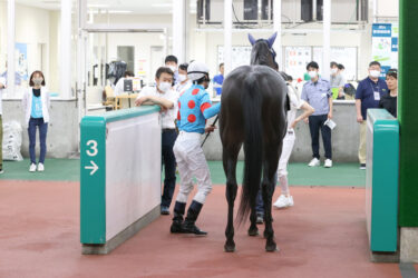 【ドゥラモンド】2021/08/19 予定通り一旦放牧へ【愛馬の近況】