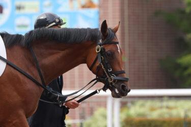 【フリートオブフット】2021/08/19 予定通り一旦放牧へ【愛馬の状況】
